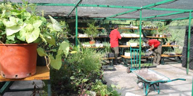 La guardería de plantas atiende a más de 120 ejemplares